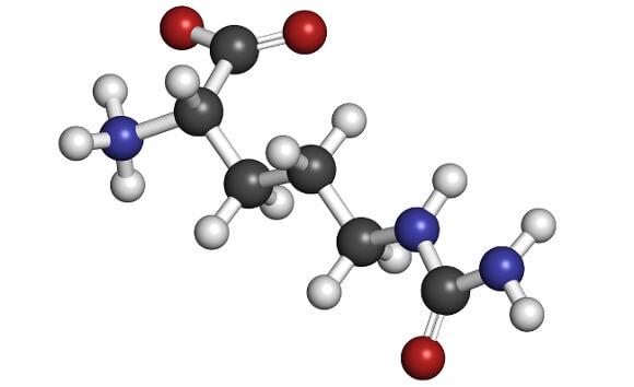 アミノ酸とタンパク質