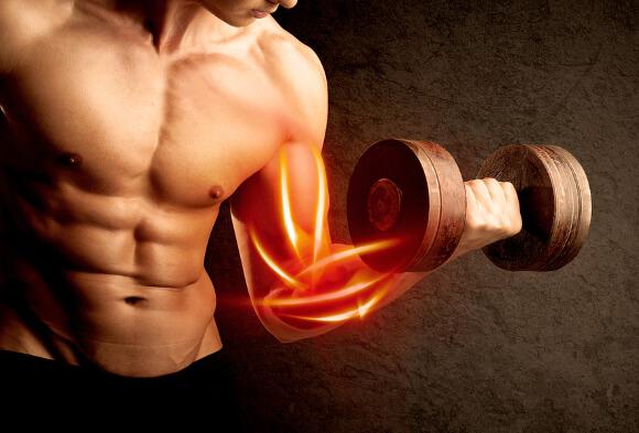 筋肉が大きくなる本質