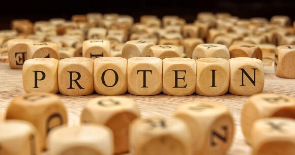 もやしのタンパク質