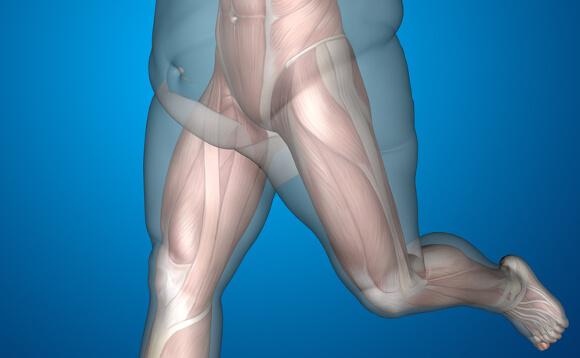 骨・筋肉・体脂肪