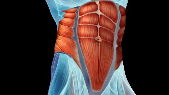 腹圧をかける筋肉