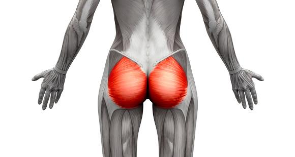 大臀筋の位置