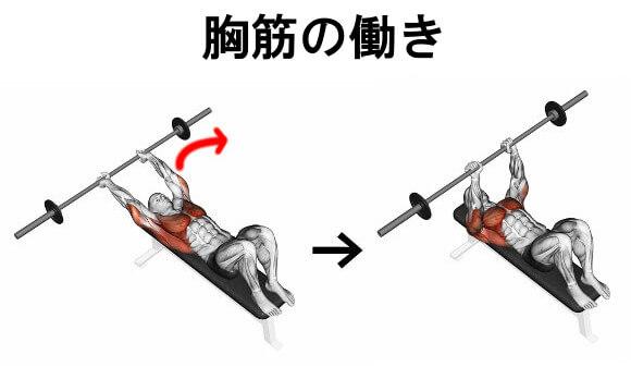 胸筋の働き