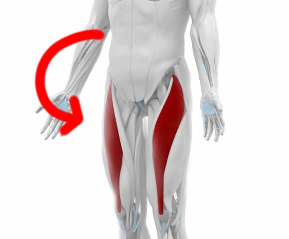 大腿直筋の働き