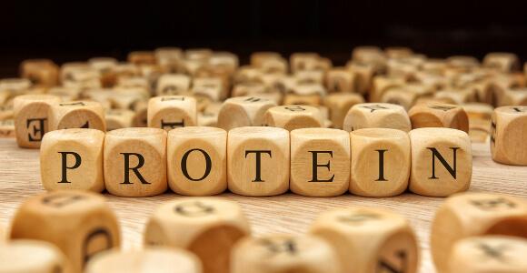 タンパク質とは