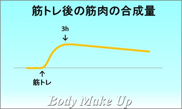 筋トレ後の筋肉の合成量