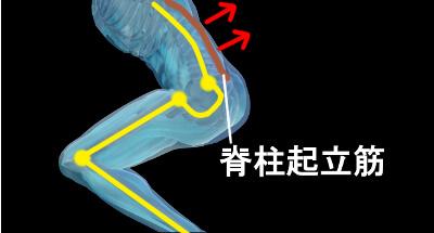 脊柱起立筋の働き