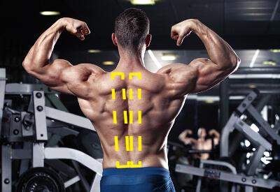 脊柱起立筋を鍛えた場合