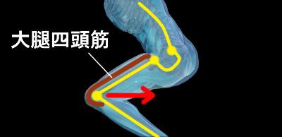 スクワットでの大腿四頭筋の働き